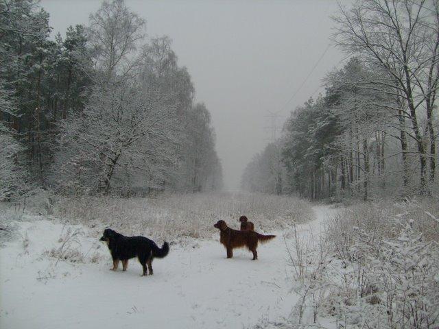 w zimie.JPG